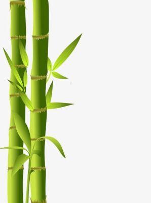 Bamboo Bamboo Silhouette, Bamboo Clipart, Bamboo Vector.