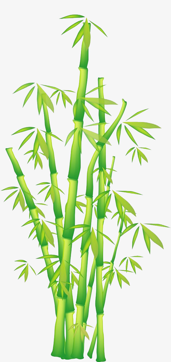 Bamboo Vector Png at GetDrawings.com.