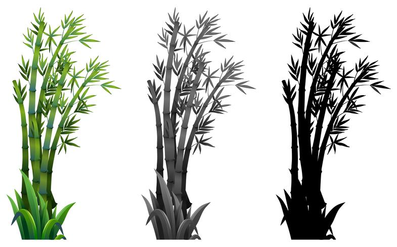 Set of bamboo plant.