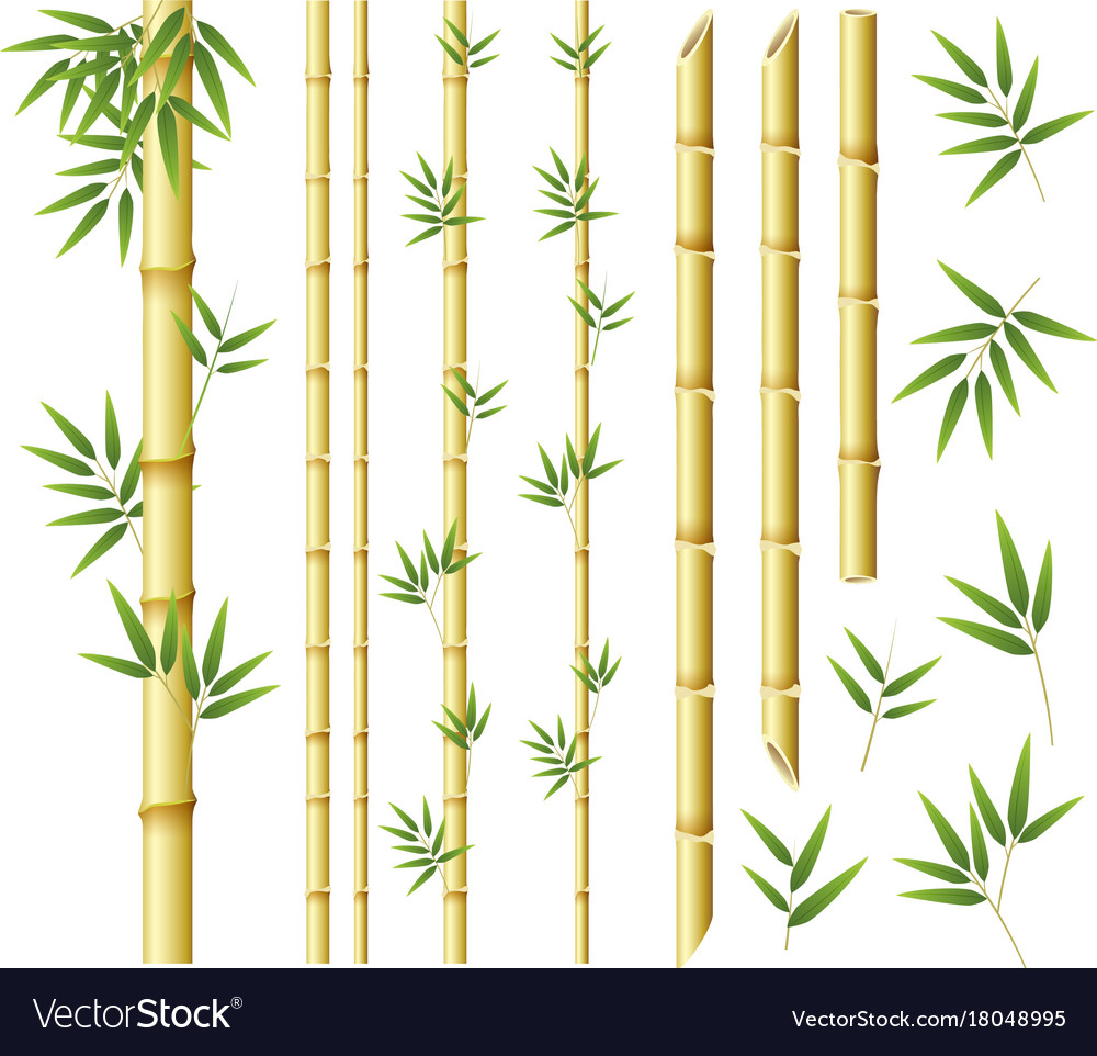 Bamboo stems and leaves on white background.