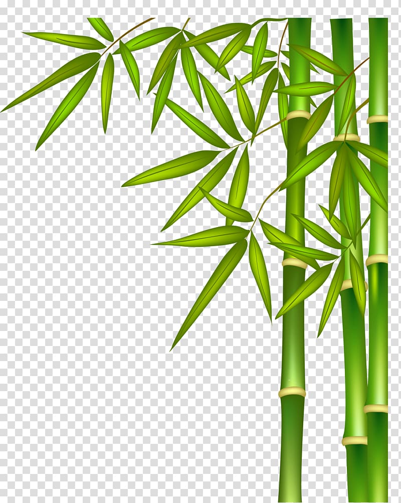 Green bamboo illustration, Green bamboo transparent.