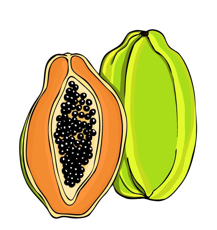 Free Papaya Cliparts, Download Free Clip Art, Free Clip Art.