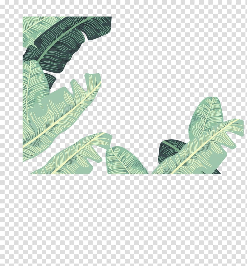 Green leafed plant, Banana leaf Euclidean , banana leaves.