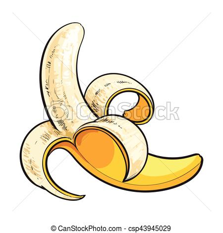 Vector Illustration of One open, peeled ripe banana, sketch style.