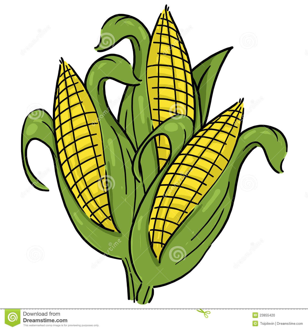 Maize clipart #11