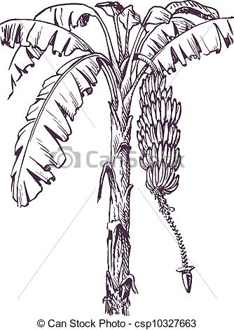 Clip Art Vector of Banana tree with banana fruit and banana flower.