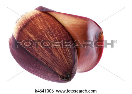 Stock Image of Edible Banana Flower k4541005.