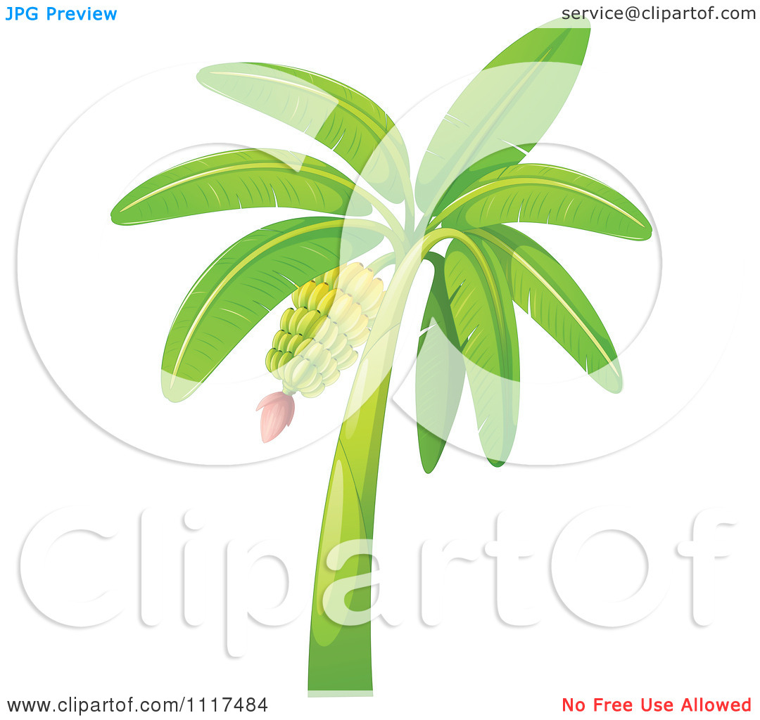 Vector Clipart Of A Tropical Banana Tree.