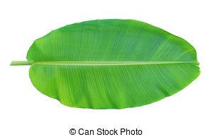 Banana leaf clipart.