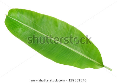 Banana Leaf Stock Photos, Royalty.
