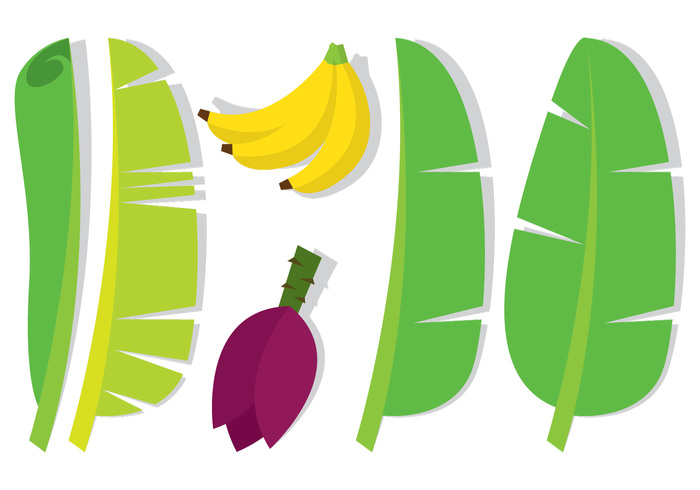 Banana leaves clipart.