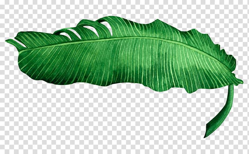 banana leaf transparent background PNG clipart.