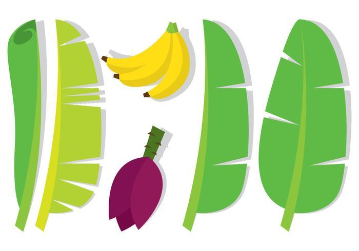Banana Leaf and Fruit.