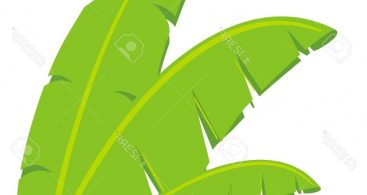 Banana Leaves Vector Archives.