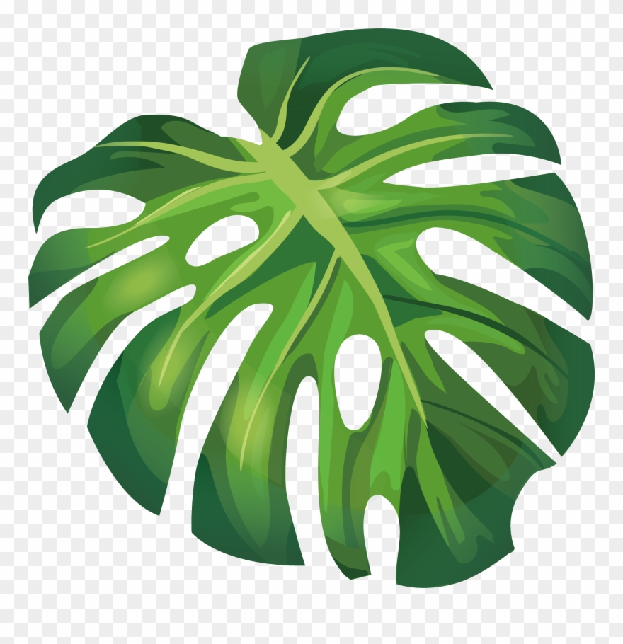 Arecaceae Euclidean Illustration Green.