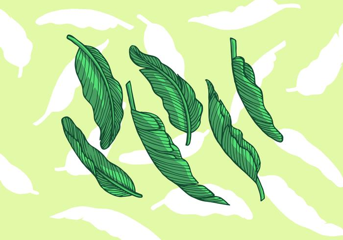 Banana Leaf Vector Illustration.
