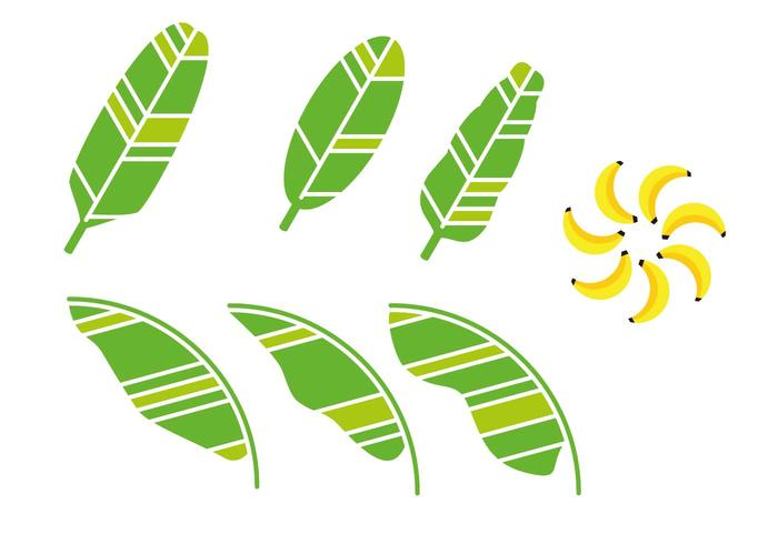 Artistic Banana Leaf Vector.
