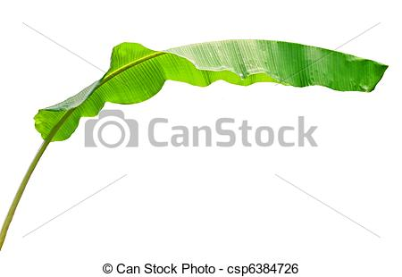 Stock Image of Banana leaf.