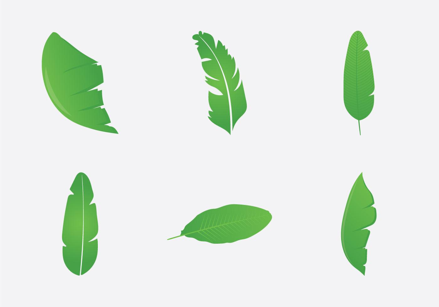 Banana Leaf Free Vector Art.