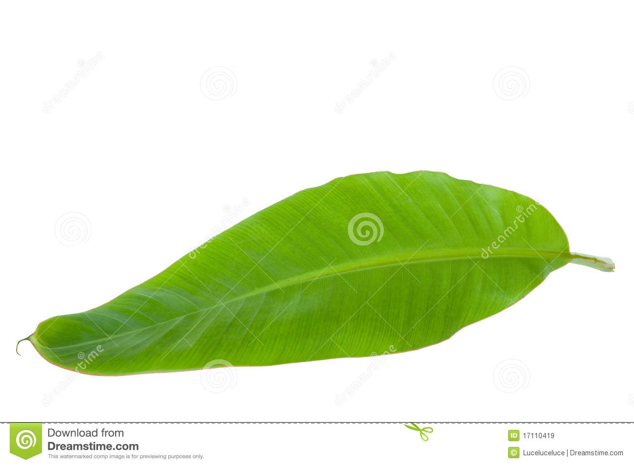 Banana Tree Stock Photos, Images, & Pictures.