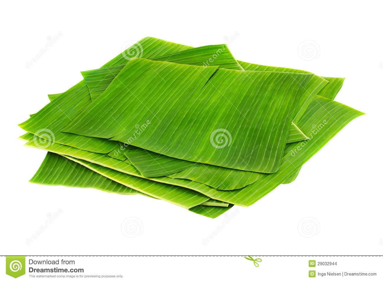 Banana Leaves Stock Image.