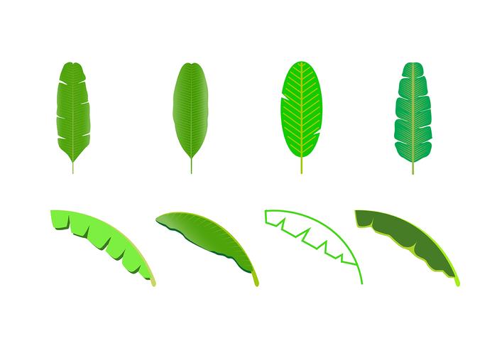 Free Banana Leaf Vector.