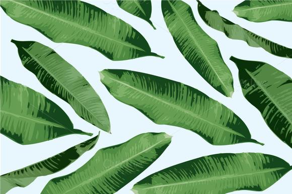 Banana leaf illustration.