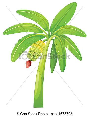 Banana tree Clip Art and Stock Illustrations. 1,714 Banana tree.