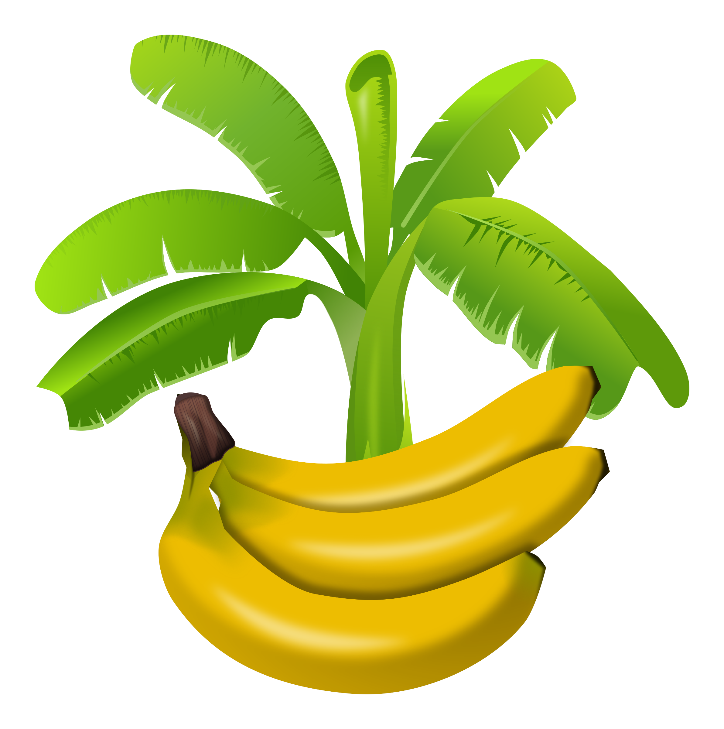 banana tree drawing png - photo #40