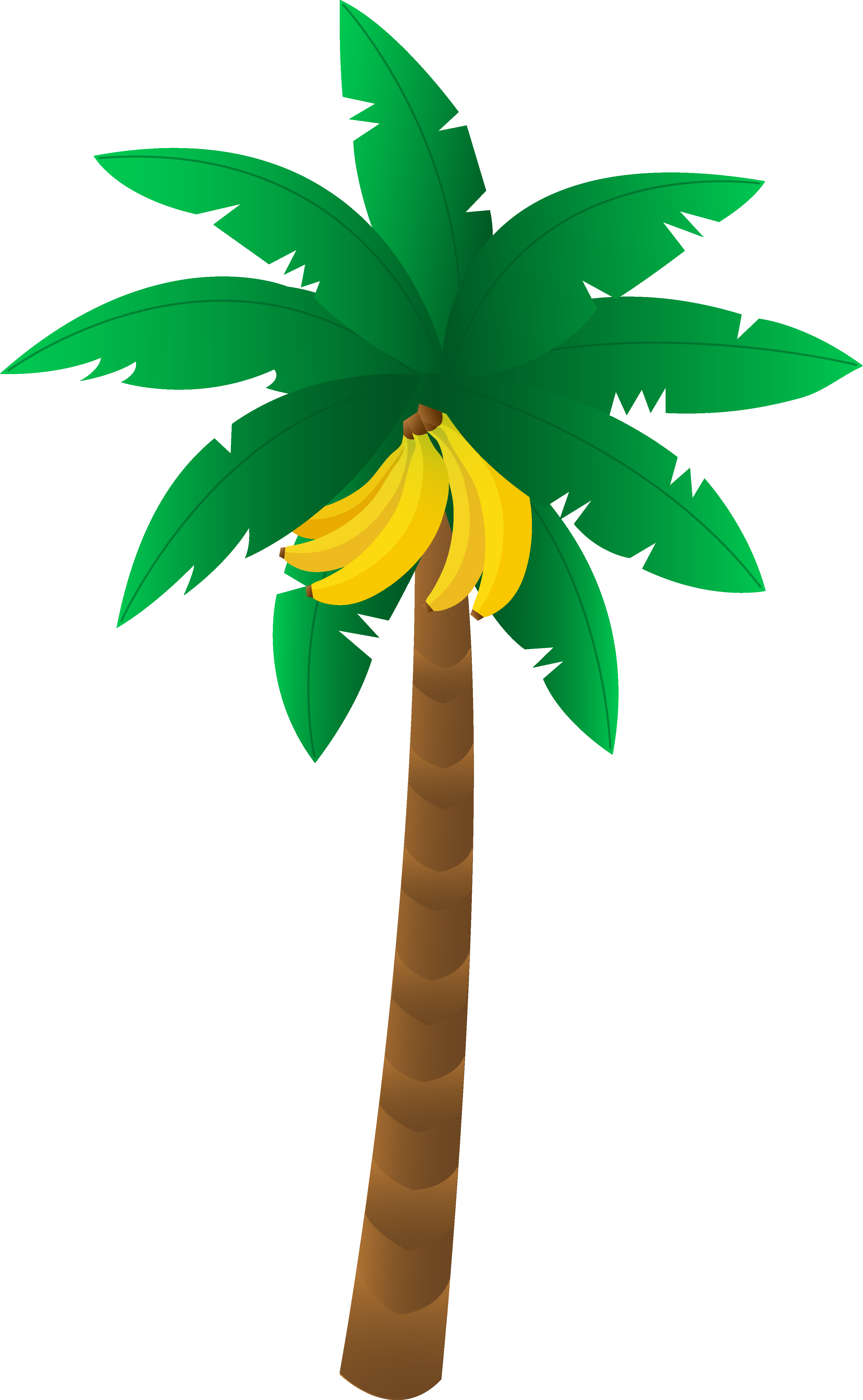 Tropical Banana Tree.
