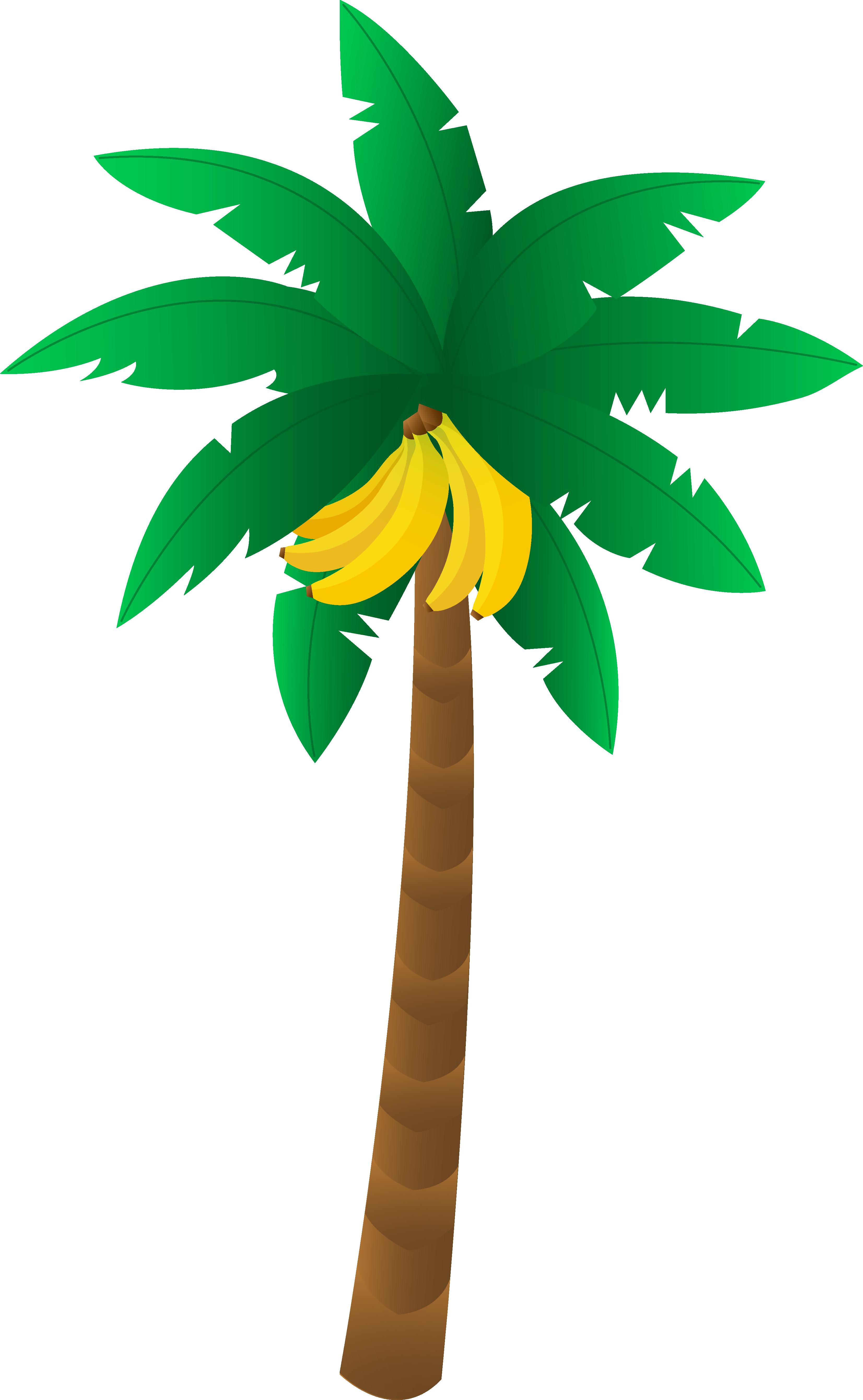 Tropical Banana Tree.