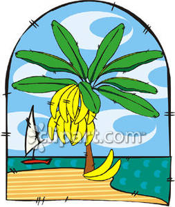 Banana Tree on the Beach.