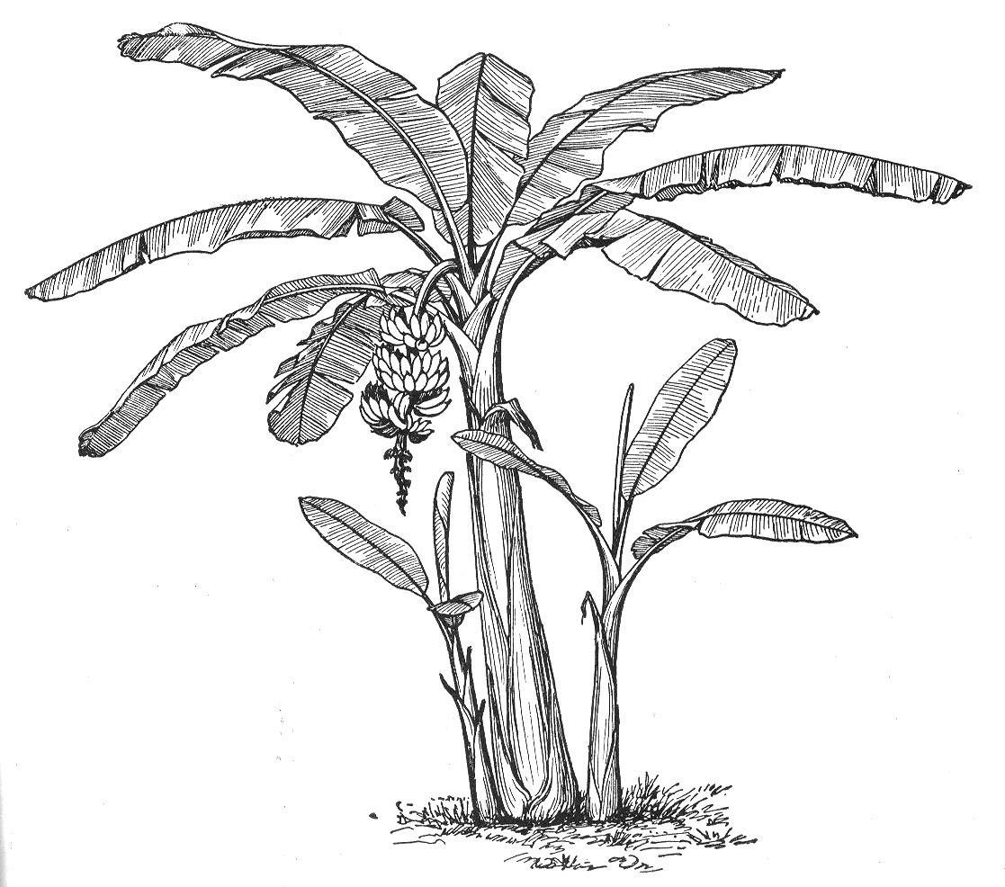 Botany Professor: The symmetry of plants.