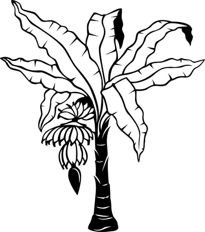 Dogwood Tree Drawing.