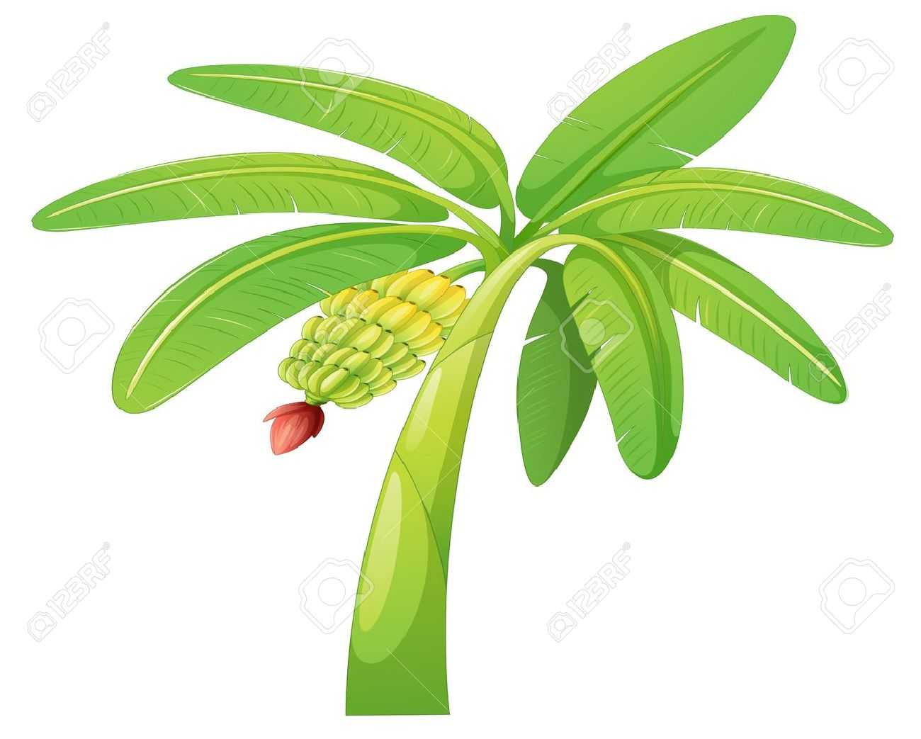 Illustration Of Banana Tree On A White Background Royalty Free