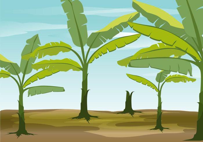 Banana Tree Vector Background.