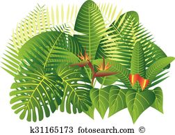 Banana shrub clipart #16