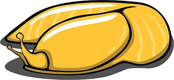 Banana Slug » Clipart Portal.
