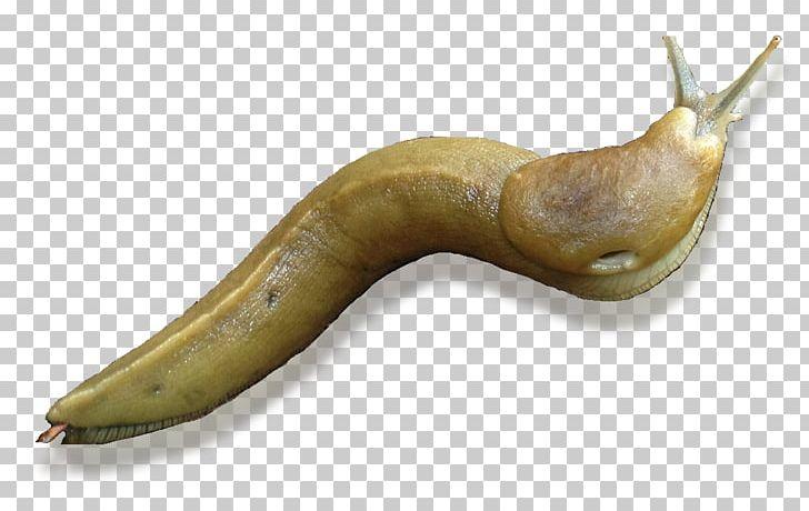 Black Slug Snail Banana Slug Gastropods PNG, Clipart, Animals, Arion.