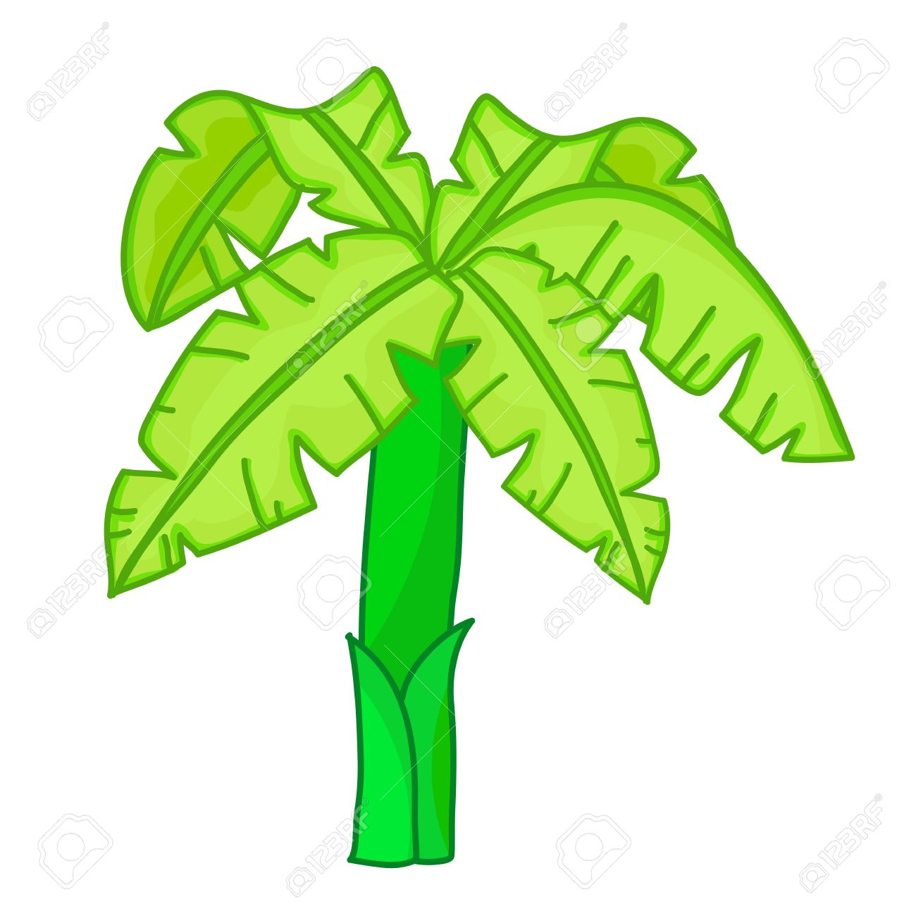 Banana Tree Isolated Illustration On White Background Royalty Free.