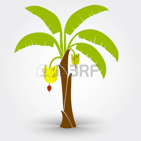 757 Banana Stem Stock Vector Illustration And Royalty Free Banana.