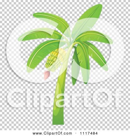 Vector Clipart Of A Tropical Banana Tree.