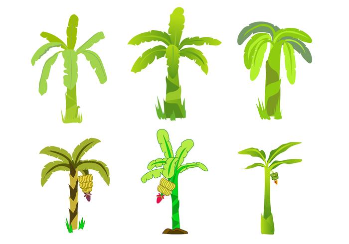Free Banana Tree Vector.