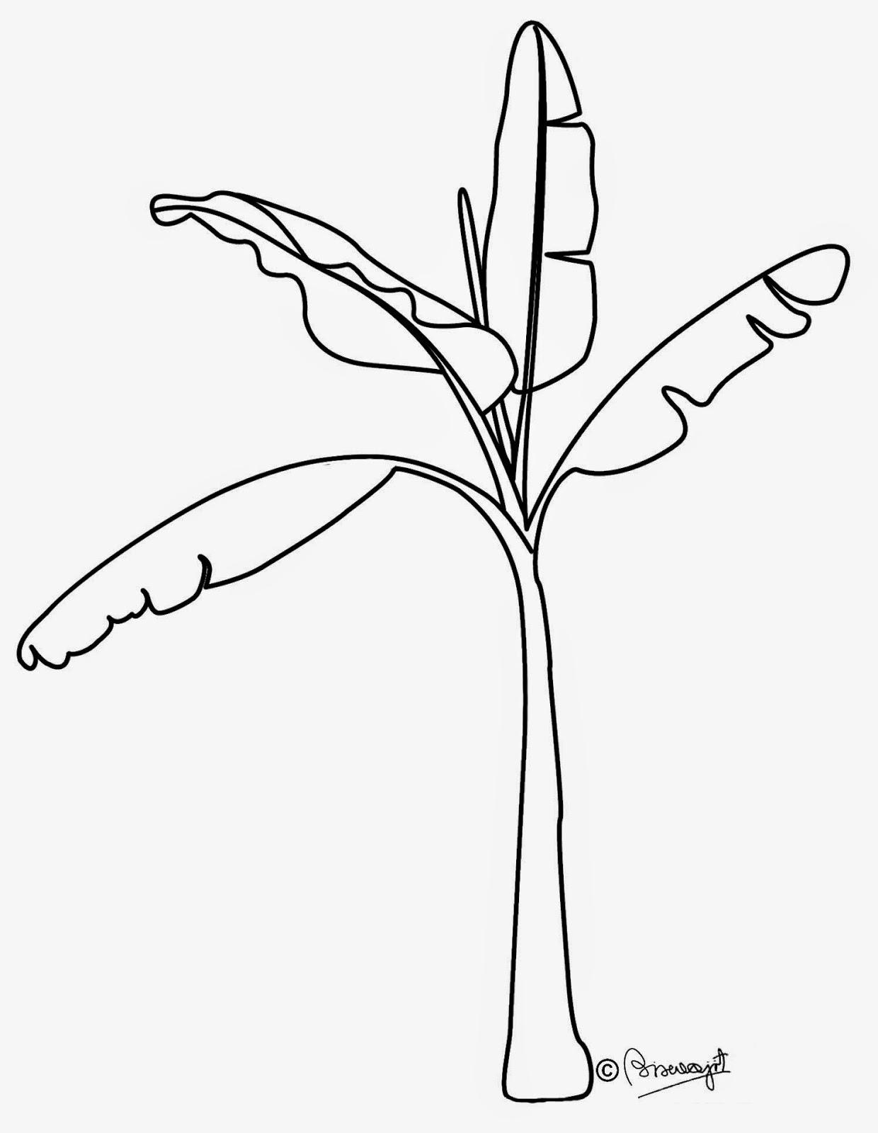 Banana tree clip art black and white.