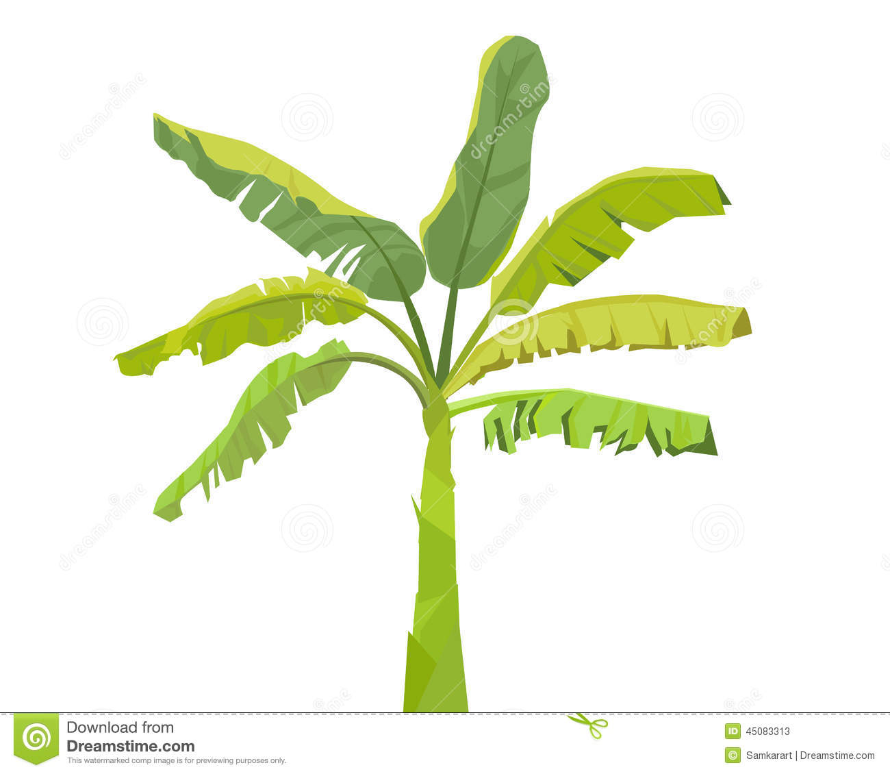 Banana Tree.