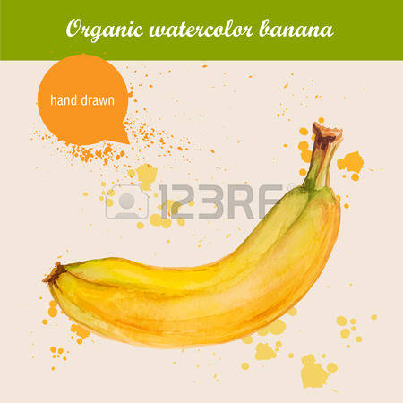 851 Banana Stem Stock Vector Illustration And Royalty Free Banana.