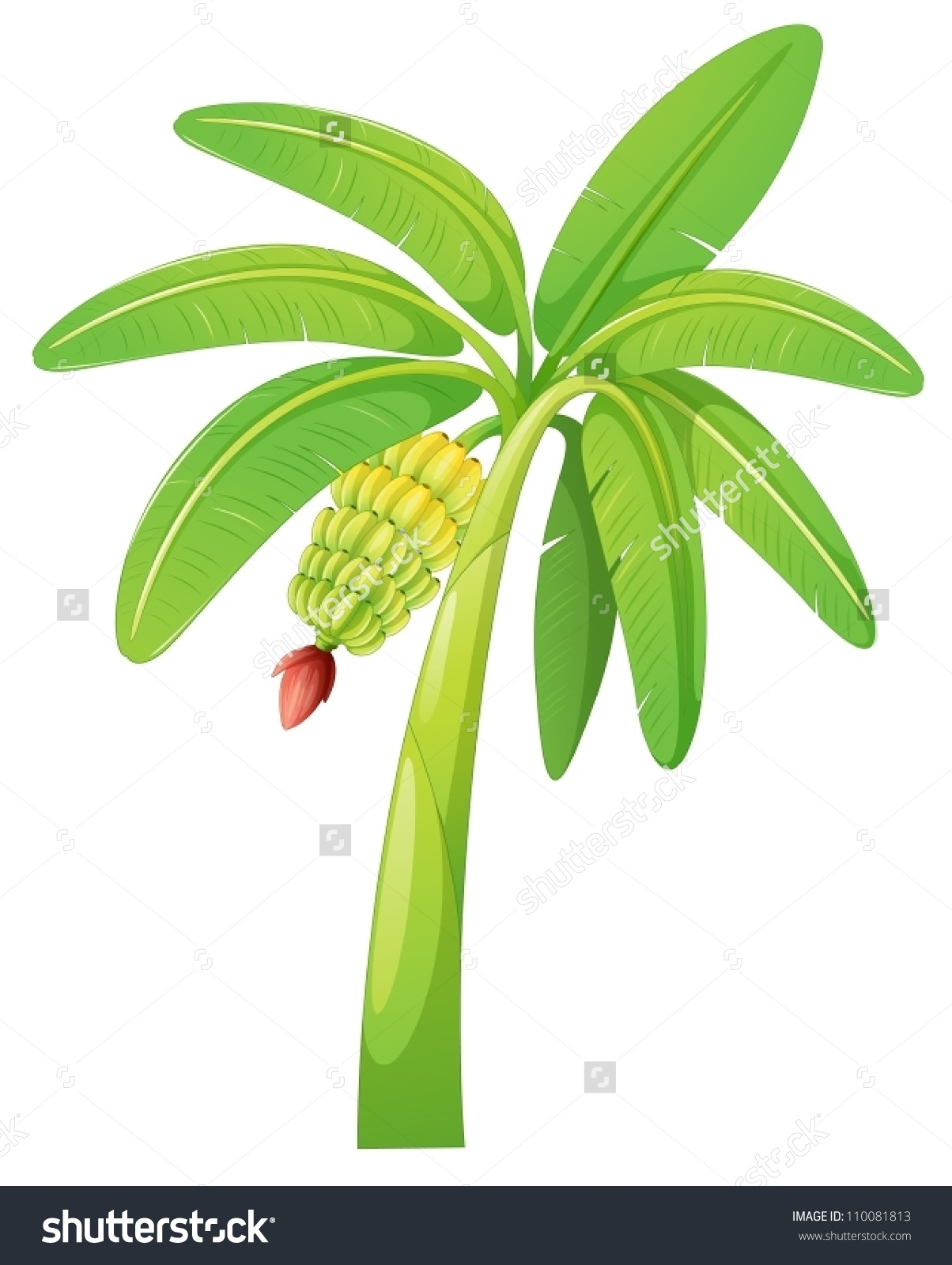 Illustration Banana Tree On White Background Stock Vector.