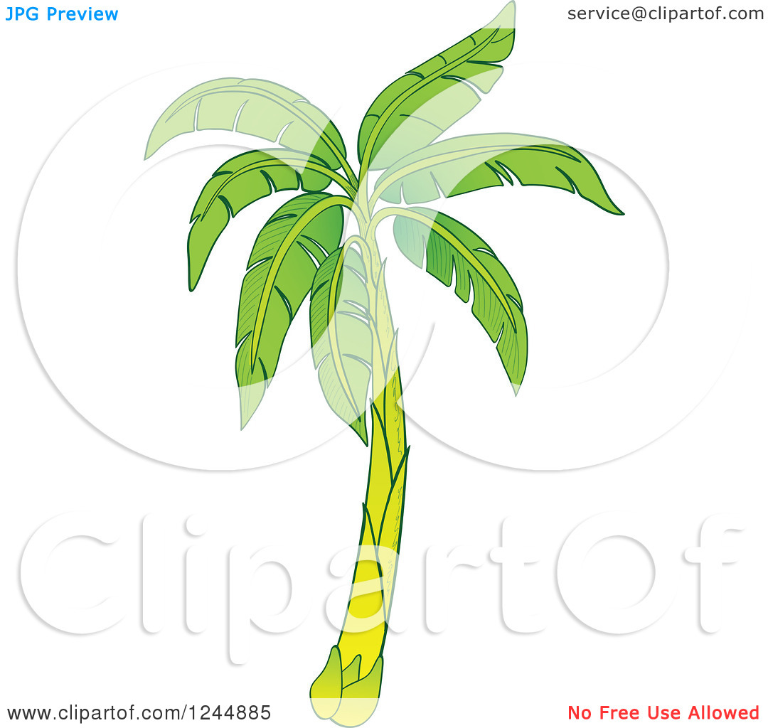 Clipart of a Green Banana Tree.
