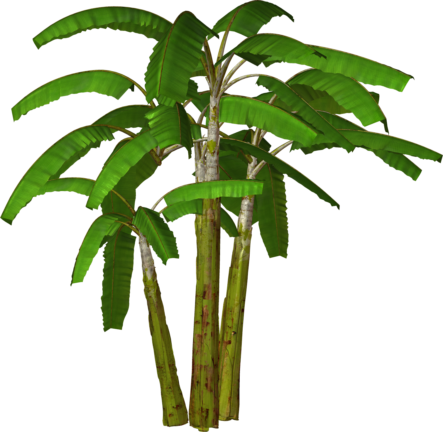 Banana palm clipart.