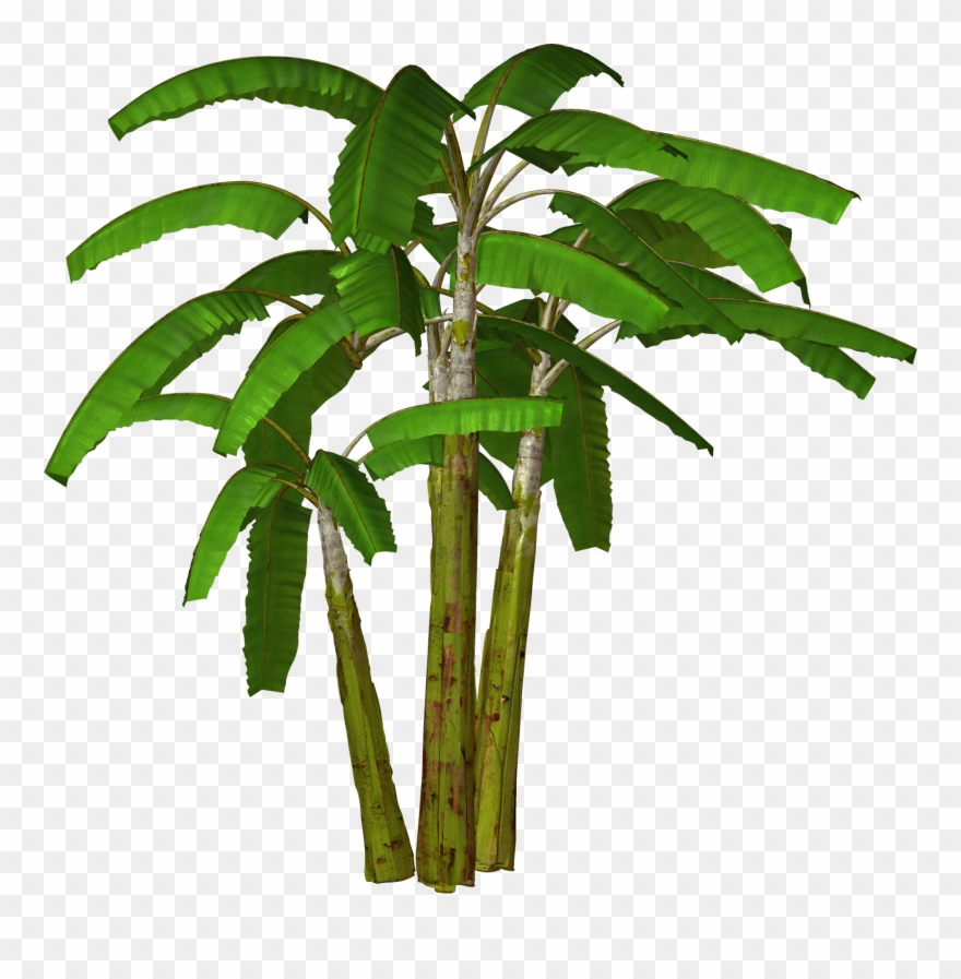 Palm Tree Clipart.